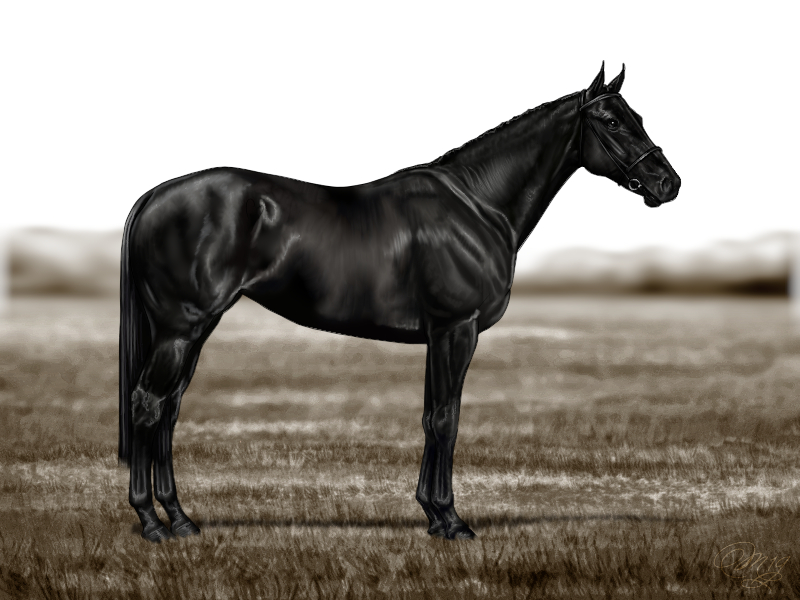 Hevosen nimi